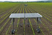 Robots anti malas hierbas